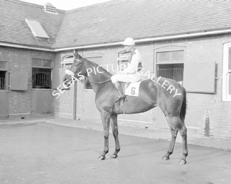 Racehorse Fulshaw Cross with Jockey Scobie Breasley